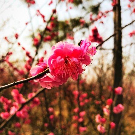 Suqian, China: photo0.jpg