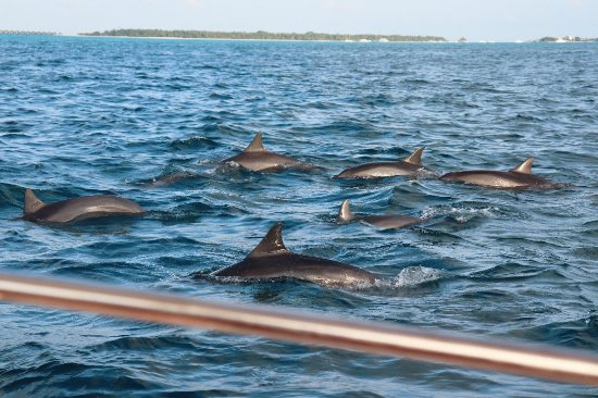 Ameera Maldives照片