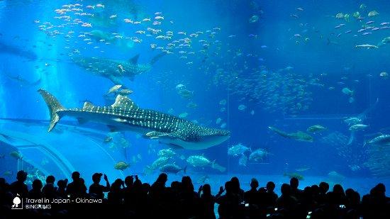 冲绳美之海水族馆