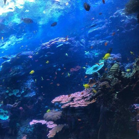 乔治亚水族馆照片