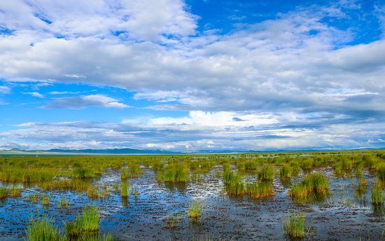 Zoige County, Cina: 花湖湿地
