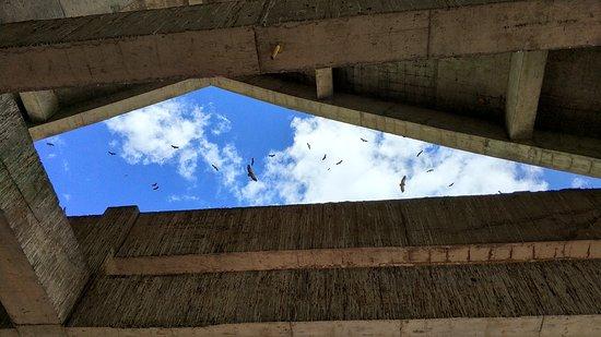 Sertar County, Chiny: 等待喂食的秃鹫