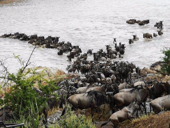 Arusha Region, Tanzania: 千军万马渡马拉河