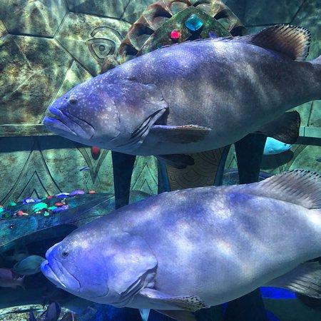 创意水族馆