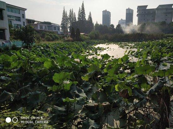 Anxiang County, Trung Quốc: 子龙庵