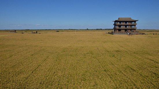 Dawa County, Chiny: 淡水稻田