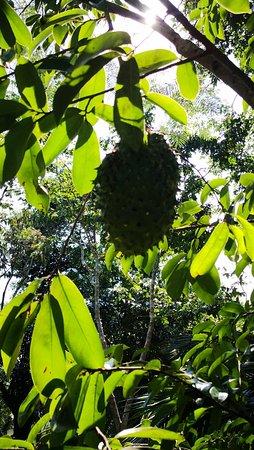 Yanuo Tropical Rain Forest Resort: IMG_20181002_144042_large.jpg