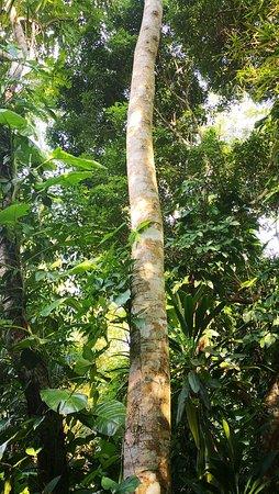 Yanuo Tropical Rain Forest Resort: IMG_20181002_154452_large.jpg