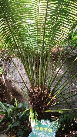 Yanuo Tropical Rain Forest Resort: IMG_20181002_152151_large.jpg