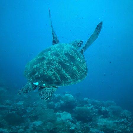 超棒的潜水体验