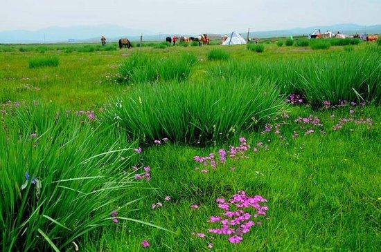 Haiyan County, Китай: 夏日的金银滩草原