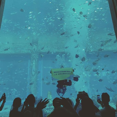 Atlantis Fun dive