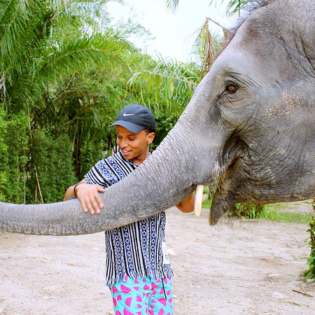 Elephant Care Park: Perfect place , happy elephant