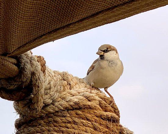 Dubai Desert Conservation Reserve: Al Maha, a Luxury Collection Desert Resort & Spa, Dubai。行政酒廊门口的阳台上,偶然见到悠闲自在的鸟儿。于是,我用手机拍下这些快乐的场景。