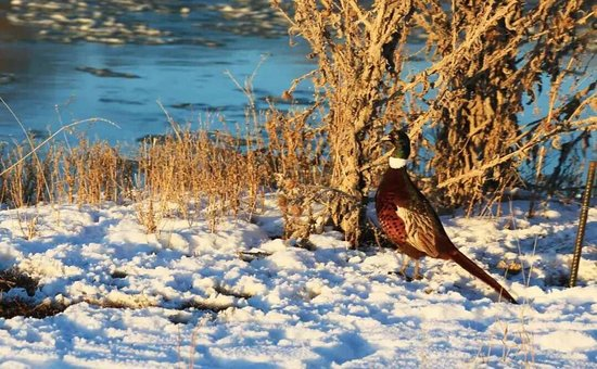Xinjiang Uygur, Kína: 冬季新疆  雪中的天山与阿尔泰山   冬游记