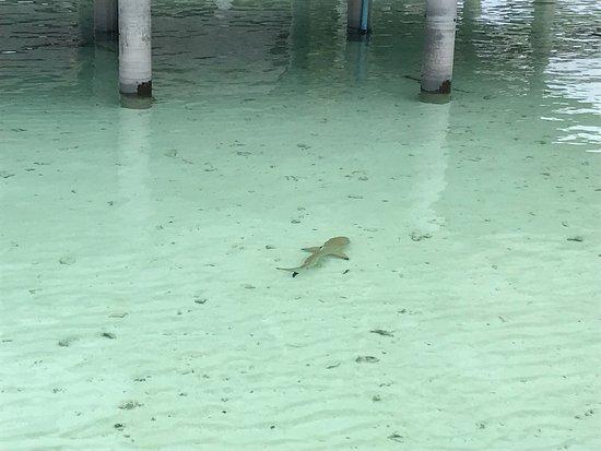 Фотография Gangehi Island Resort & Spa, UHC Resort