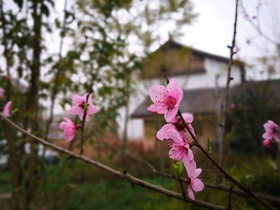 Bilde fra Zigong
