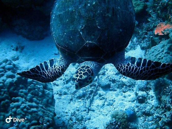 Фотография Palau Dive Adventures