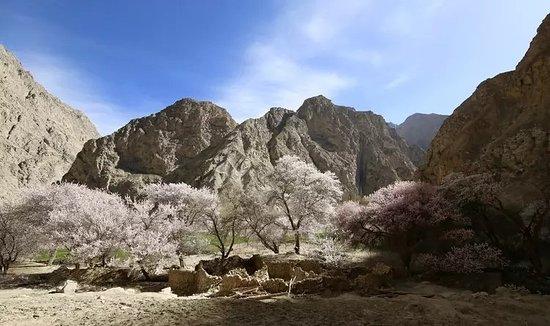 Xinjiang Uygur, Kiina: 新疆春季追花之旅,帕米尔高原的大同杏花村 | 走马行疆旅行