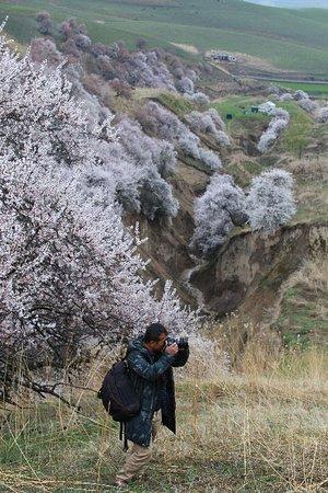 Xinjiang Uygur, Kiina: 大同乡+ 伊犁河谷,南北疆追花之旅 | 走马行疆旅行