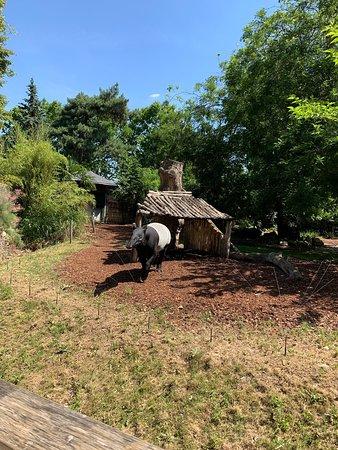 Menagerie Le Zoo Du Jardin Des Plantes Paris 2019 All You Need