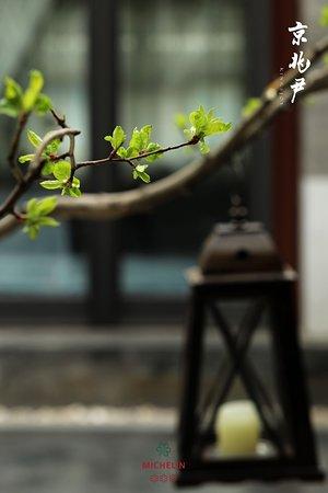 草长莺飞 万物生长 #春#护生日记#米其林#黑珍珠#LALISTE