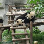 Chengdu Photo