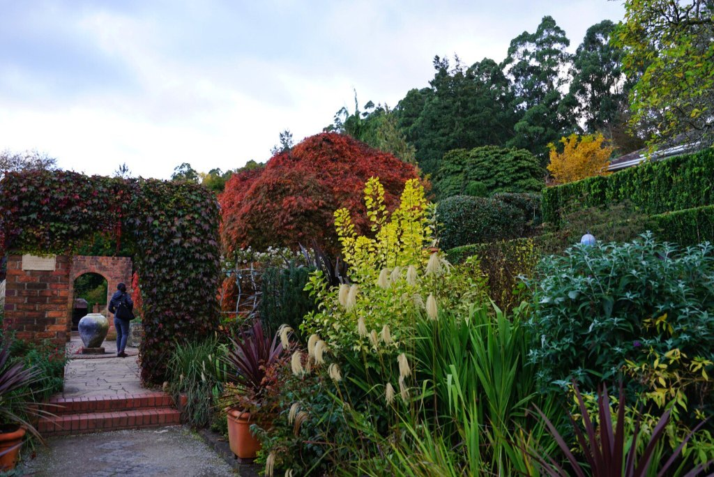 Cloudehill nursery and gardens olinda australia top for Gardening 101 australia