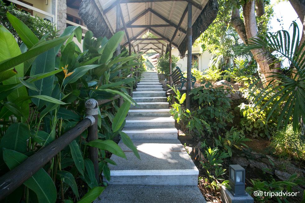 可可海酒店和黑鸚鵡套房酒店