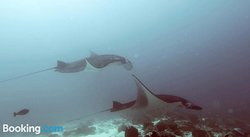 Absolute Scuba Bali Dive Resort