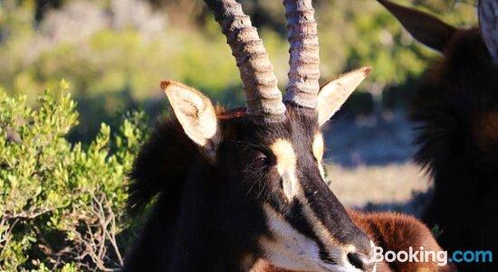 Animals - Foto di Doornkom Private Game Reserve, Uitenhage - Tripadvisor