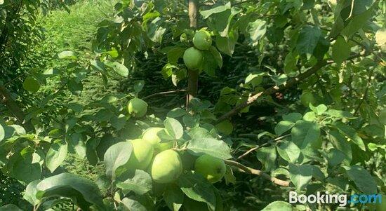 Pictures of Agro Na Wapniarni - Wapniarnia Trzecia Photos - Tripadvisor