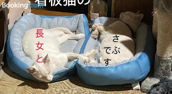 Pictures of Guest House Salt Beach - Yokkaichi Photos - Tripadvisor