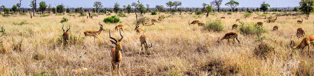 Kruger National Park Tourism 2019: Best of Kruger National