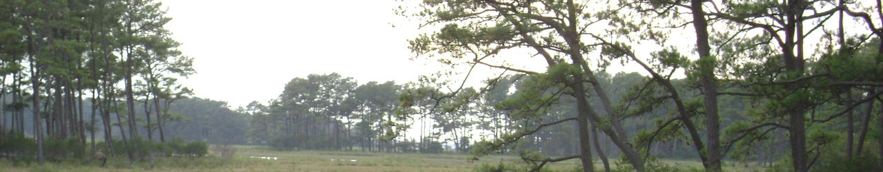 ‪Chincoteague National Wildlife Refuge‬