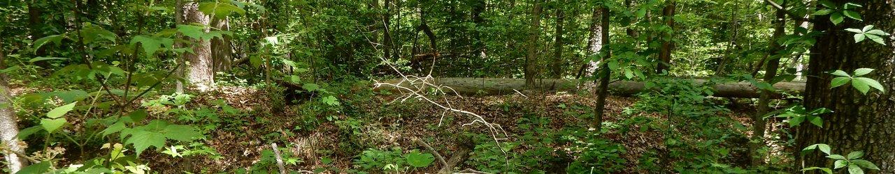 North Anna Battlefield Park
