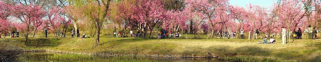 Koga Kubo Park