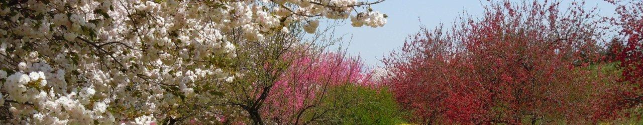 Chikumagawa Fureai Park