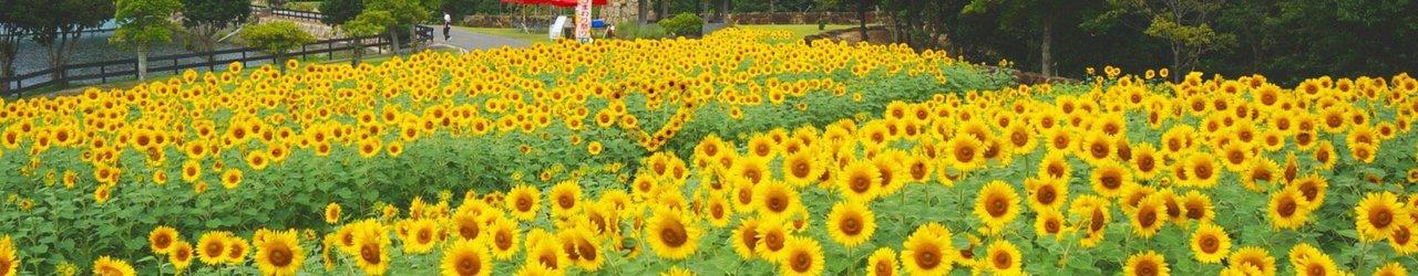 Awaji Farm Park England Hill