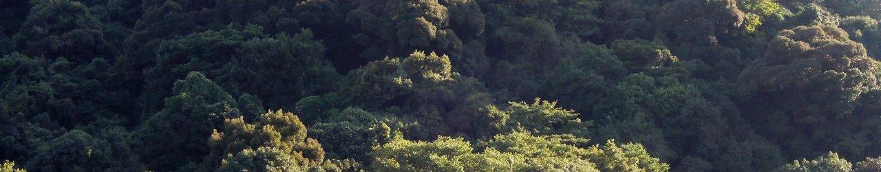 Ikushima Island