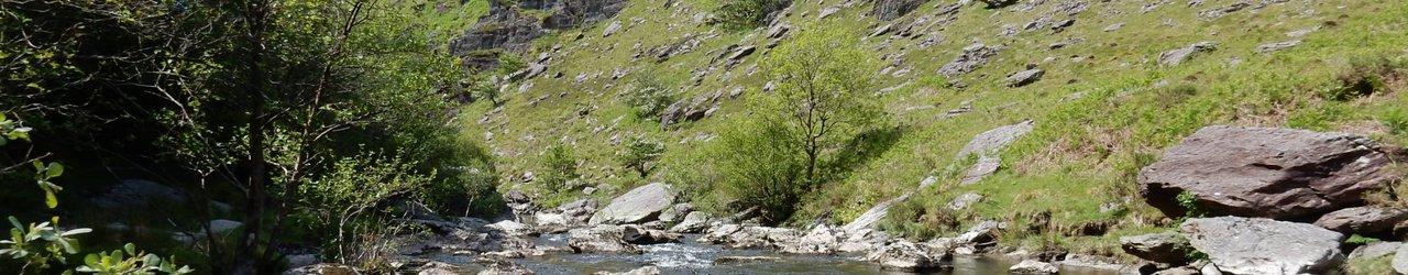 Gwenffrwd-Dinas Nature Reserve