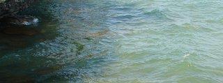 Fish Creek