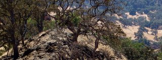 Rose Peak, Ohlone Wilderness Trail