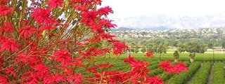 Camarillo Grove Park