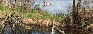 Fumee Lake Natural Area