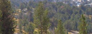 Humboldt National Forest