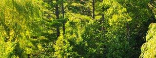 Parc du Domaine Vert
