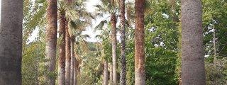 Il giardino botanico di Lamezia Terme
