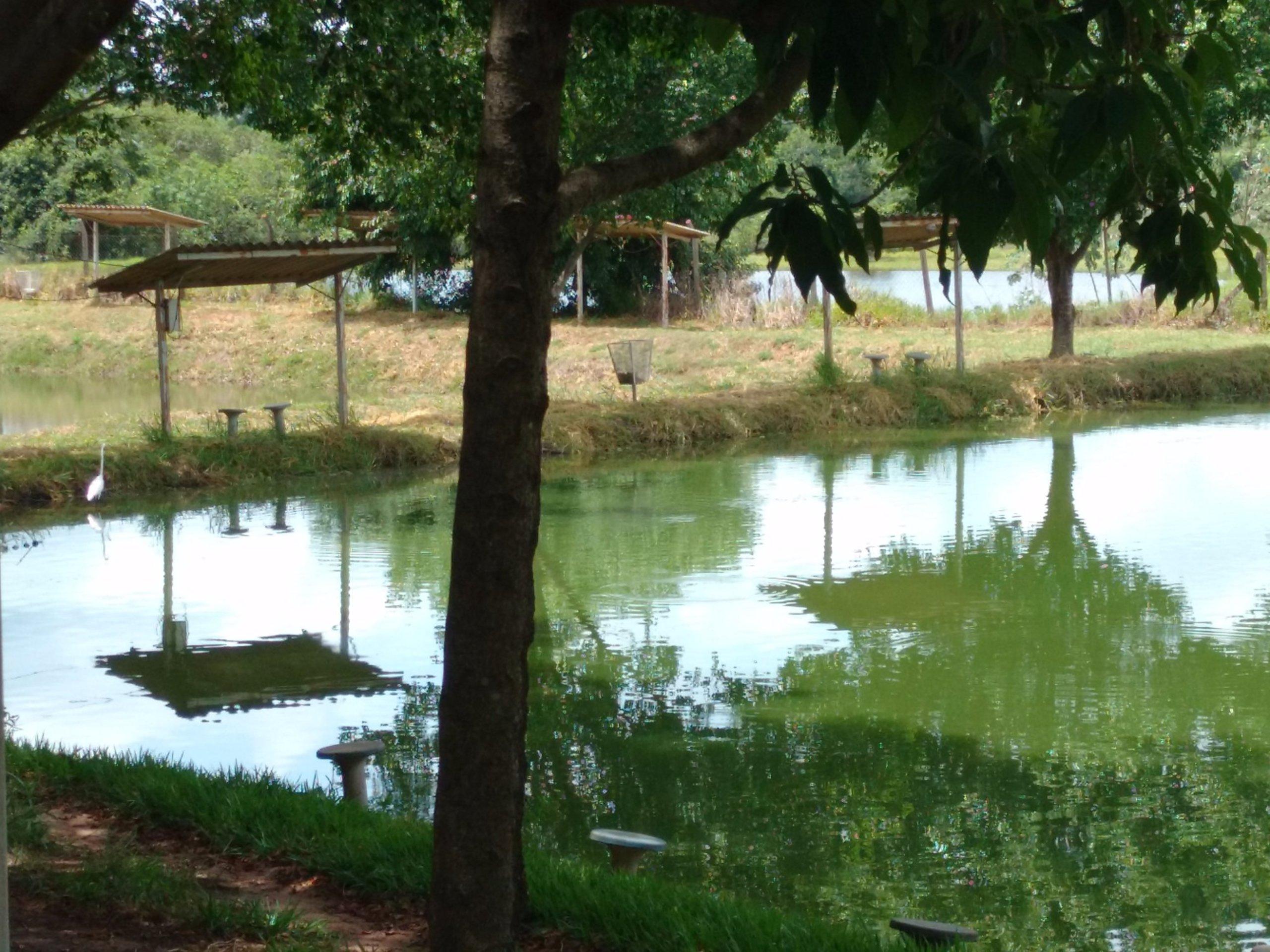 Bastos São Paulo fonte: media-cdn.tripadvisor.com