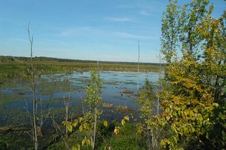 Tiny Marsh Provincial Wildlife Area